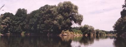 Soutok Moravy (zprava) a Dyje (zleva), dále již spojené řeky pokračují jako Morava až do Dunaje.