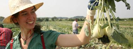 Srostlé kedlubny zůstávají na poli Foto: Zachraň jídlo