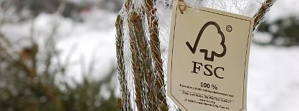 Logo FSC na vánočním stromku z krkonošských lesů. Foto: Hugo Charvát/Ekolist.cz