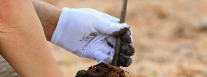 Sázení stromku Foto: Phrompas Shutterstock