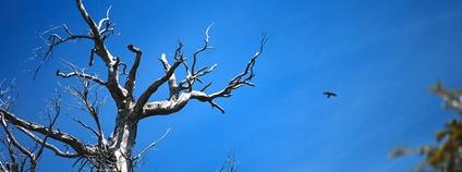 Mrtvý strom Foto: Santiago Allaria Flickr