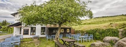 Strom roku 2020 - jabloň v Machově na Náchodsku Foto: Marek Olbrzymek Nadace Partnerství