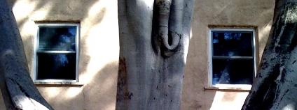 Jak blízko může růst strom u domu? Foto: Adam Be / Flickr.com