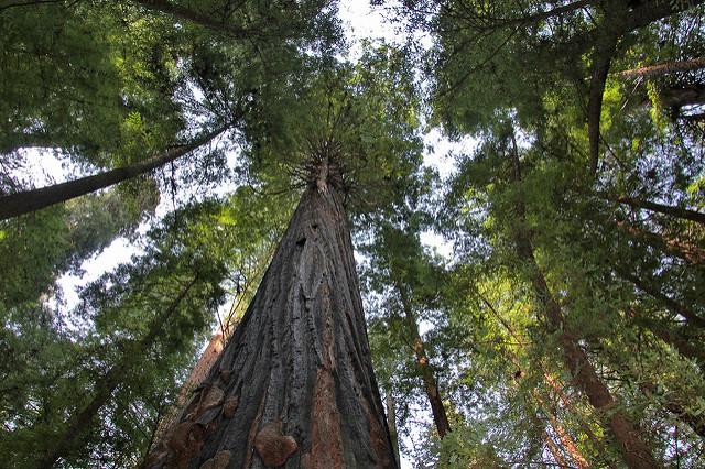 V první fázi projektu se vyznačily stromy dle projektové dokumentace určené buď ke kácení, nebo k odbornému ošetření. Aktuálně probíhá kácení, a poté bude následovat odborné ošetření vybraných stromů stromolezeckou technikou. / Ilustrační foto