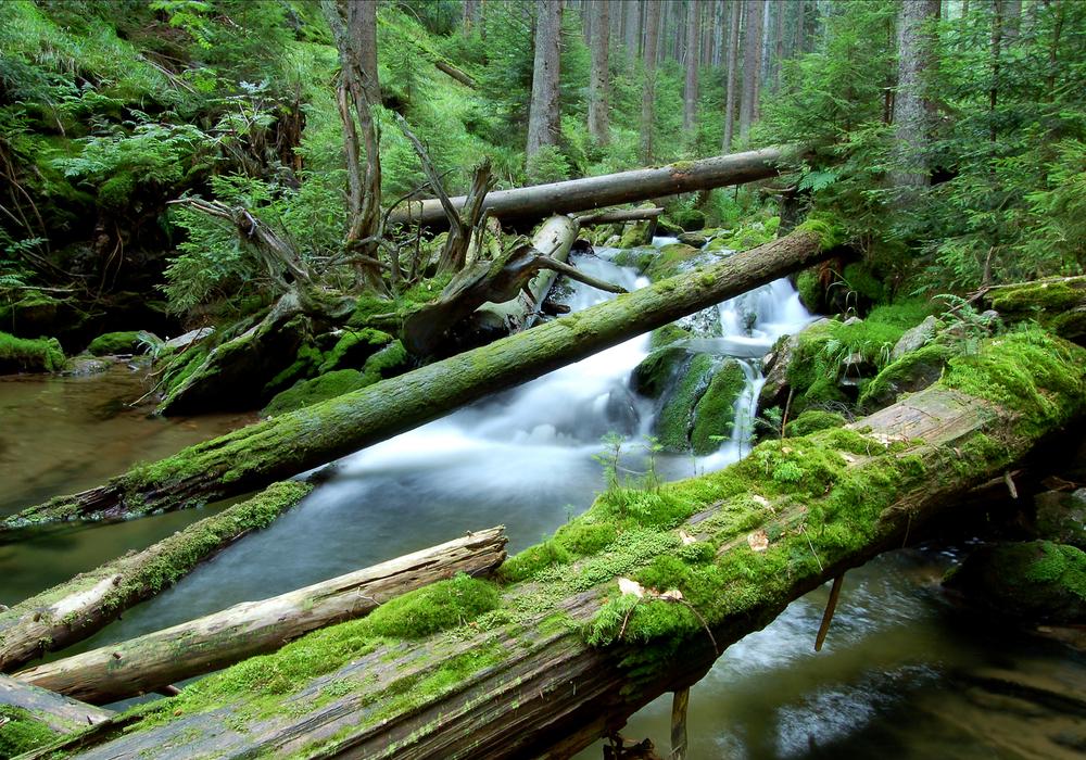 Podle vědců ztratí šumava příležitost nechat přírodu aby se