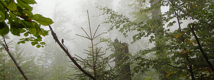 České lesy ztrácí biodiverzitu, ale ptákům se v nich líbí. Foto: Trojmezenský prales v NP Šumava, Zdeňka Vítková/Ekolist.cz