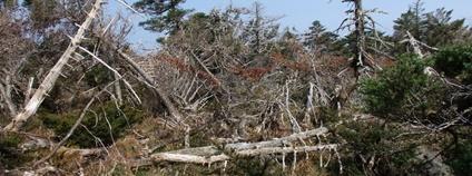 Národní park Hallasan (Jižní Korea), po ničivém tropickém cyklónu Foto: J. Altman Botanický ústav Akademie věd