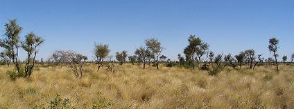 Tanami v Austrálii Foto: Anna Petts Flickr.com