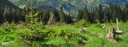 Tichá dolina ve Vysokých Tatrách Foto: Slavo Haladej / Wikimedia Commons