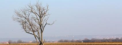 Sucho v krajině Foto: pxhere