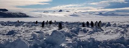 Tučňáci císařští na Rossově šelfovém ledovci Foto: cedartree_13 / Flickr