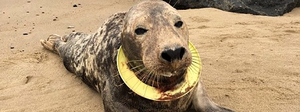 Foto: Peter Ansell / Friends of Horsey Seals