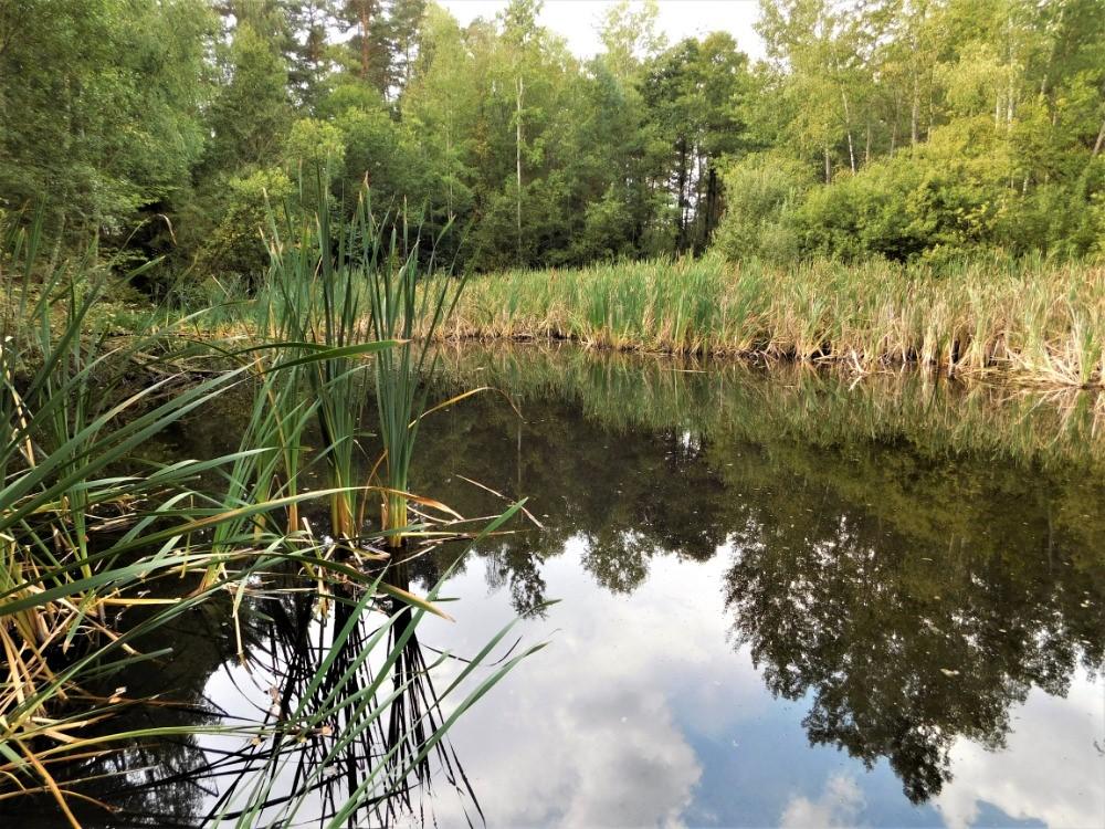 Tůň v Pískovně Hroznějovice s výskytem tří druhů čolků, užovky obojkové, vodomila temného a dalších brouků