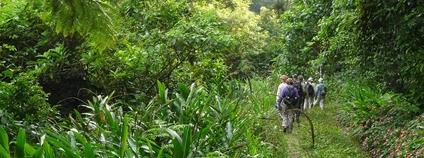 Turisté v brazilském lese Foto: Blake Maybank Flickr
