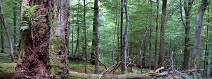 Foto: Jan Řezáč / Výzkumný ústav lesního hospodářství a myslivosti
