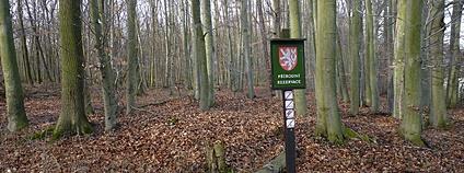 Přírodní rezervace U Výpustku v CHKO Moravský kras Foto: Michal Klajban Wikimedia Commons