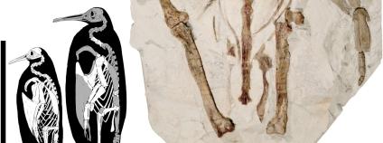 Foto: Vertebrate Paleontology