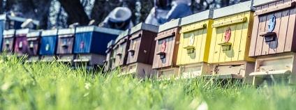 Foto: BeeHousing