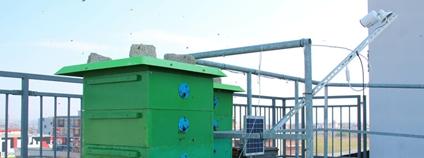Na střeše plzeňské strojní fakulty vznikla včelí laboratoř Foto: ZČU v Plzni