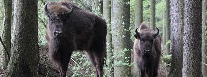 Foto: Ondřej Kott, Wiebke Müller / Zoo Tábor