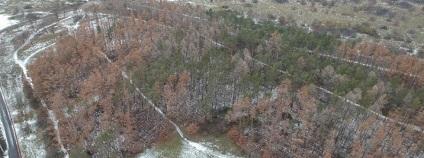 Letecká fotografie uschlého borovicového lesa. Na snímku je vidět uschlý borovicový les, který by za normálních podmínek měl být v zimním období zelený. <br />