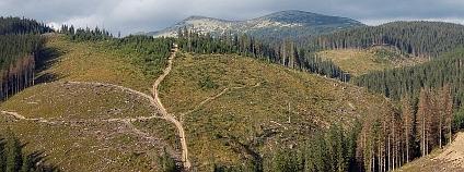 Nepoužívané cesty po těžbě dřeva zůstávají v krajině jako jizvy, které odvádějí pryč vodu. Foto: Štefan Vaľo / Povodne.sk