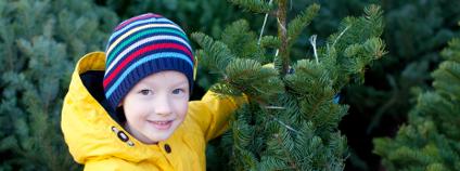 Nakupování vánočního stromku Foto: Aleksei Potov Shutterstock