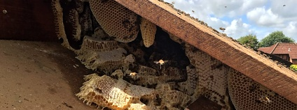 Foto: The Tree Bee Society