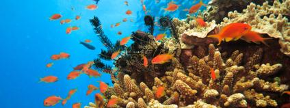 velký bariérový útes Foto: Pete Niesen Shutterstock