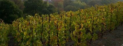 Vinohrady Foto: carolee mitchell Flickr.com