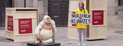 Gorilí albín a Greta Thunbergová v muzeu voskových figurín v Barceloně Foto: Museu de Cera de Barcelona / Facebook