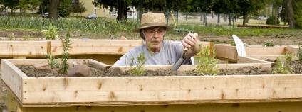 Výše položené záhony mohou umožnit zahradničení i lidem na vozíku Foto: dcwcreations / Shutterstock