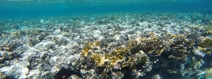 Korálový útes Foto: Pixamops pixabay.com