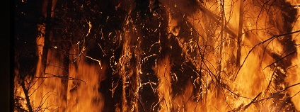 Požár lesa Foto: skeeze pixabay.com