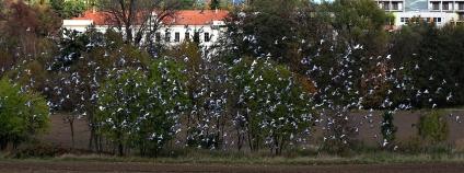 Praha -  Trojmezí Foto: ŠJů Wikimedia Commons
