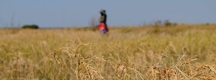 Zemědělství v Zambii Foto: WorldFish Flickr