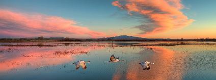 """Příroda není umělecké dílo. A to ani ve chvílích, kdy nám například západ slunce připadá """"kýčovitý"""". Na ilustračním snímku západ slunce na Bosque del Apache. Foto John Fowler / Flickr"""