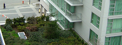 Zelená střecha Foto: pnwra / Flickr.com