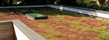 Zelená střecha s rozchodníkem Foto: Le Kizz Flickr.com