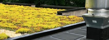 zelená střecha Foto: Tom Grundy Shutterstock