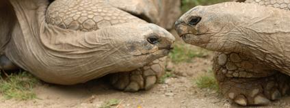 Želvy obrovské Foto: Rusty Dodson Shutterstock