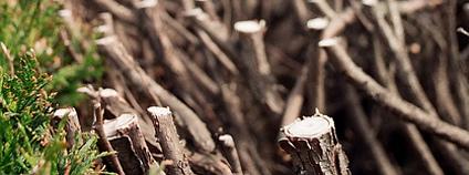 Sestříhaný živý plot Foto: Bob MacCallum / Flickr.com