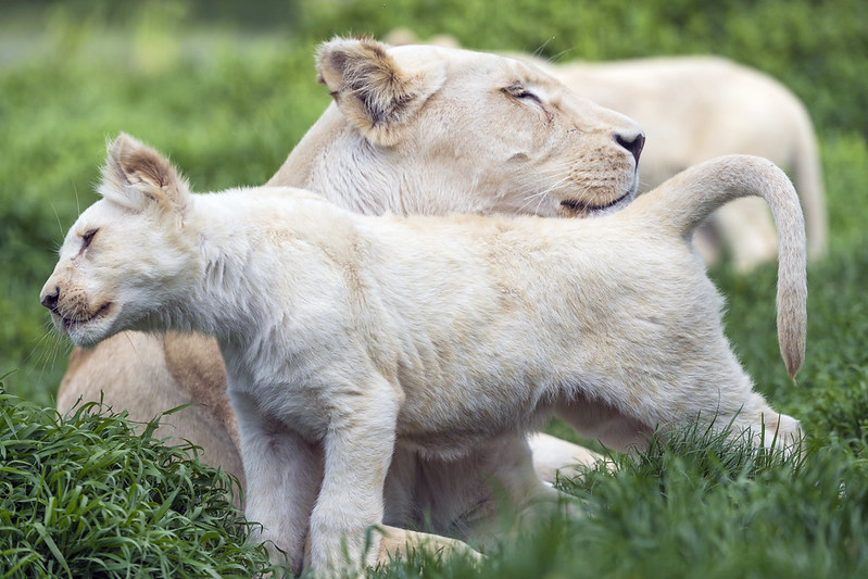 Zoo Hodonín spustila crowdfundingovou sbírku. Přispěvatelé si mohou vybrat odměnu