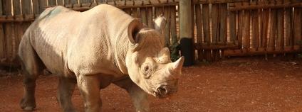 Nosoro��ice Eli�ka v Africe Foto: Jan Stejskal / Zoo Dv�r Kr�lov�