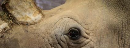 Nosorožec tuponosý Foto: Simona Jiřičková Zoo Dvůr Králové