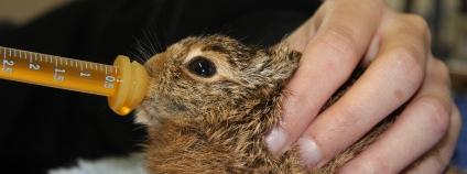 Zajíček v péči záchranné stanice Foto: Zvíře v nouzi